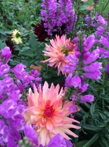 an untended garden